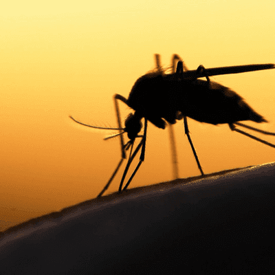 mosquito exterminators in Sugar Land